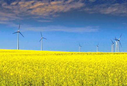 Windfarm and rapeseed field - a common sight in Germany.  Source: Inside Climate News.